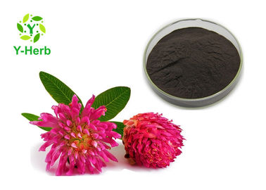 Trifolium Pratense Flower 2.5% 8% 20% 40% Red Clover Extract ผงไอโซฟลาโวน